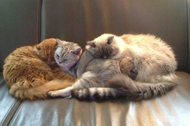 three cats cuddling