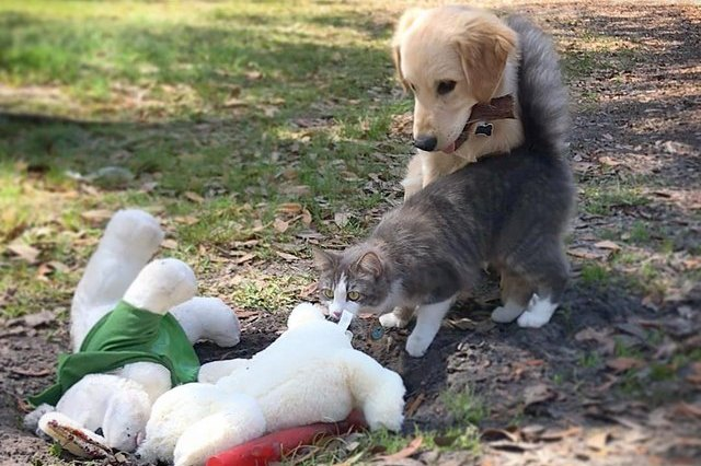 cat and dog with stuffed animals outside