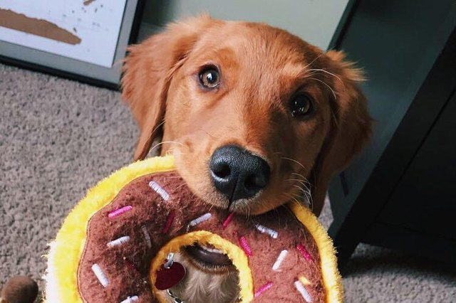 dog with donut toy