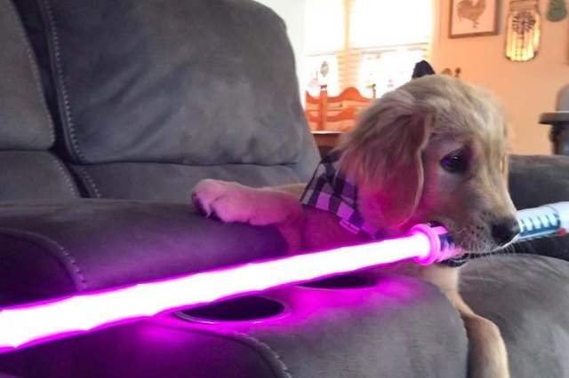 dog with star wars lightsaber