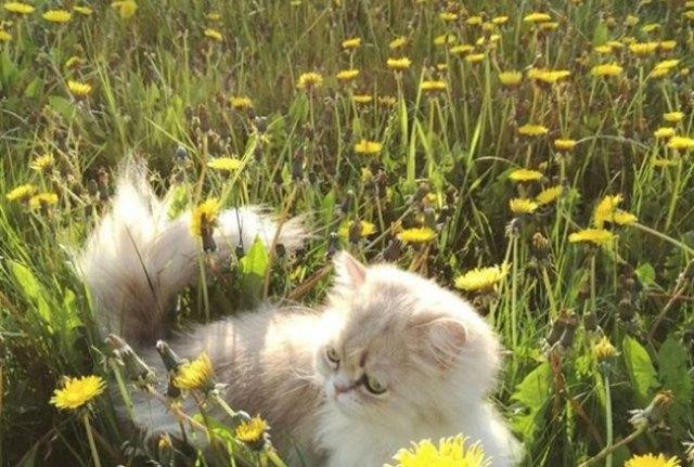 cat in field of flowers