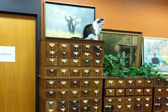 cat perched on library filing cabinet