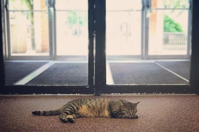 cat napping in front of library doors