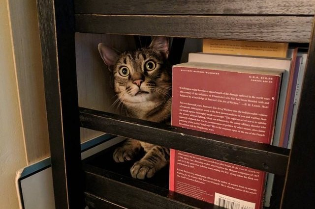 cat on a library cart with books