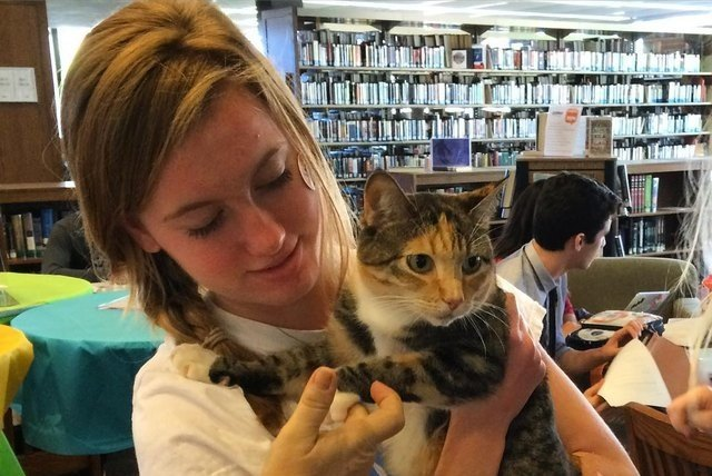 librarian with cute cat