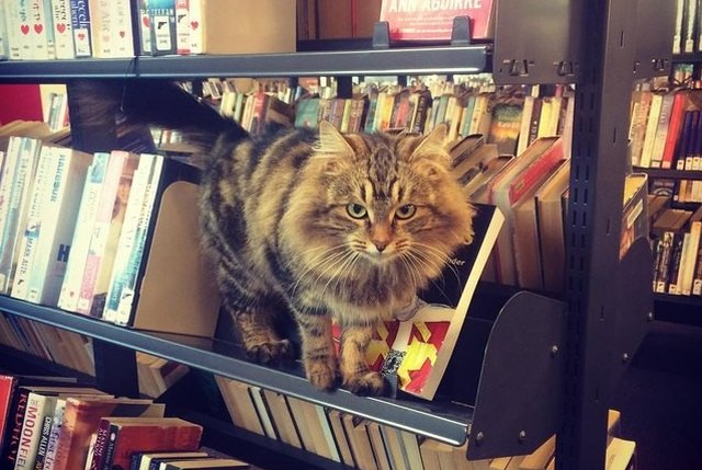 cat on library cart