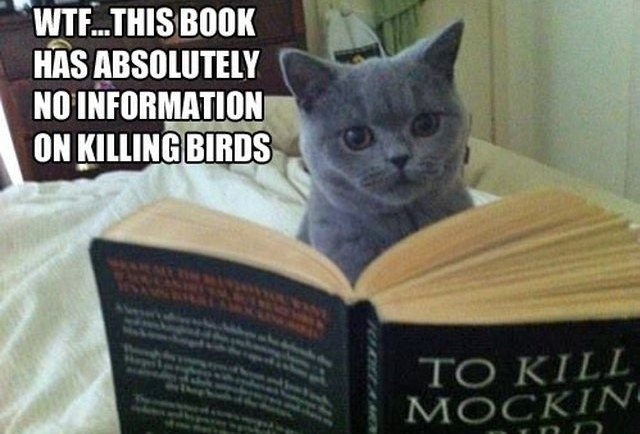 cat reading To Kill a Mockingbird