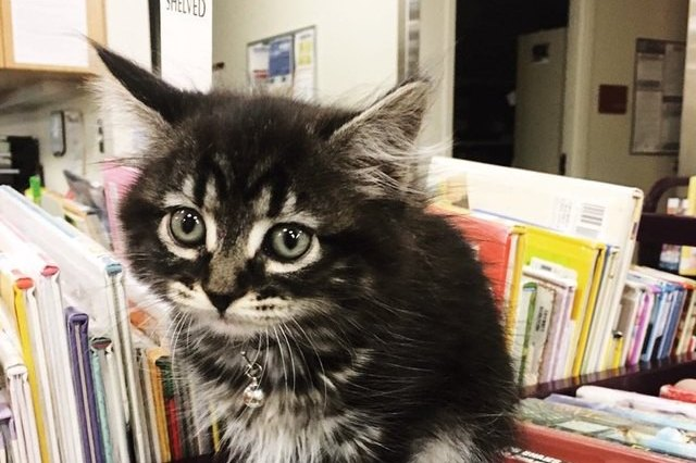 tiny kitten among library books