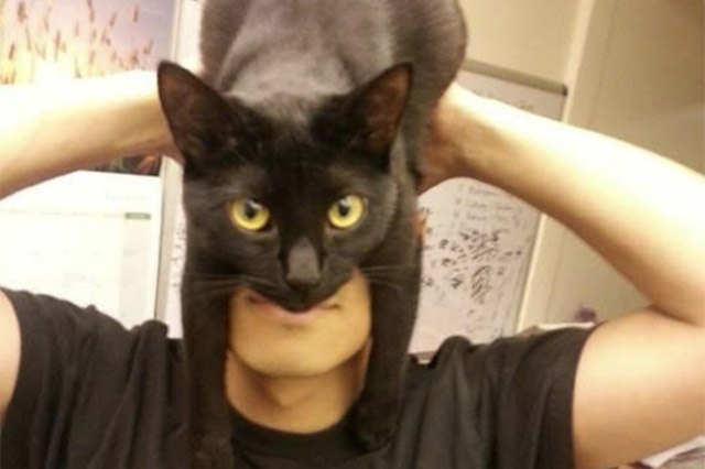 Black cat sitting on top of a man's head and it looks like he's wearing a cat mask