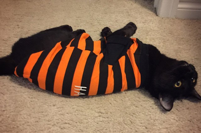 Black cat wearing black and orange striped shirt.