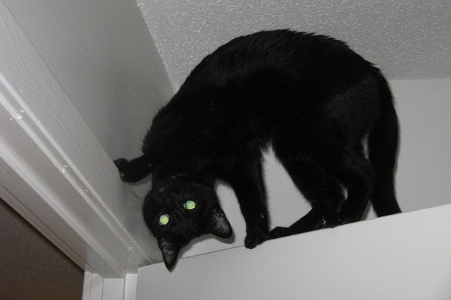 Black cat standing on top of door frame at a very odd angle