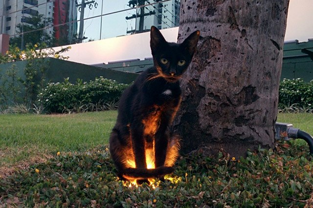 Black cat sitting on top of a light in a yard and it looks spooky