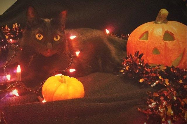 Cat sitting among Halloween decor