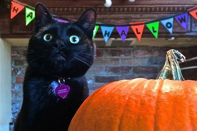 Black cat with big pumpkin
