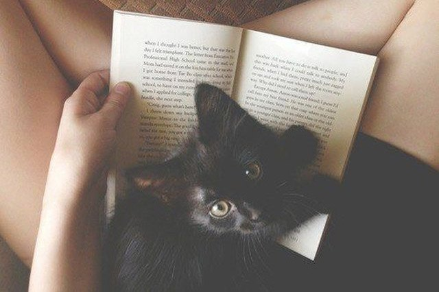 Black kitten sitting on a book in a lady's lap