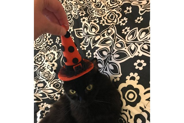 Black cat with a witch hat