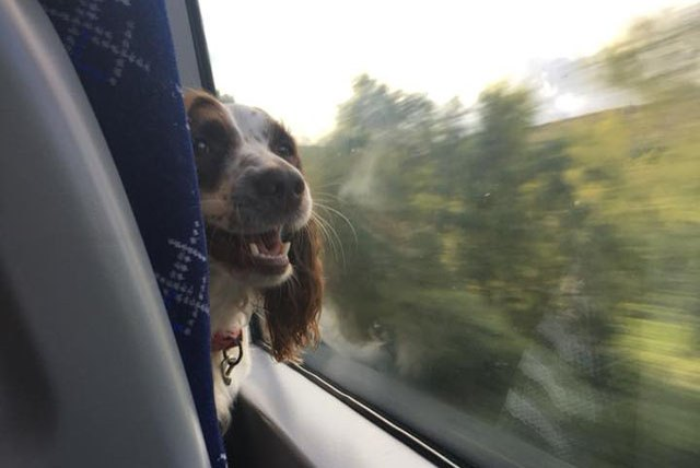 20 dogs you might meet during your daily commute