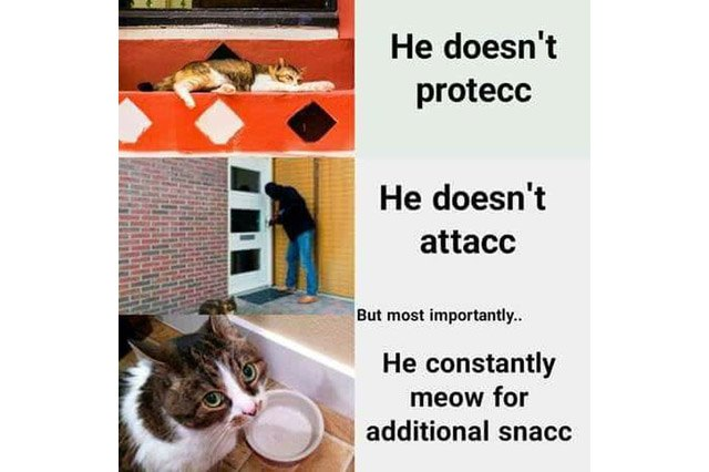 protecc, attacc cat meme