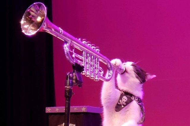 Cat appearing to play the trumpet.