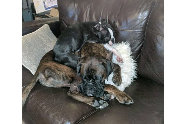 Dogs using other dogs as pillows