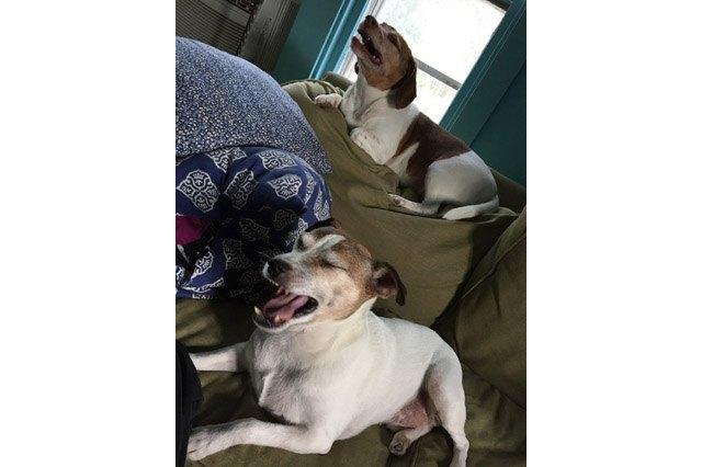 Dogs sneezing
