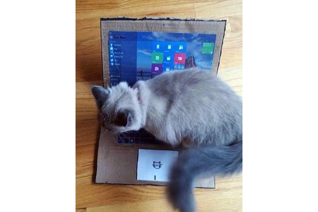 "Cat sitting on a cardboard ""laptop."""