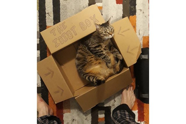 "Cat in a cardboard box that says ""The Idiot Box"""