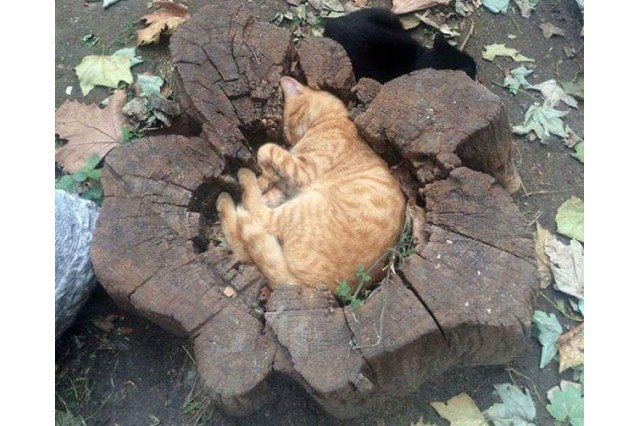Cat curled up in indentation in a tree stump.