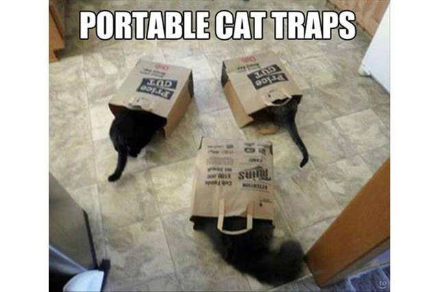 Three cats sticking their heads in paper grocery bags.