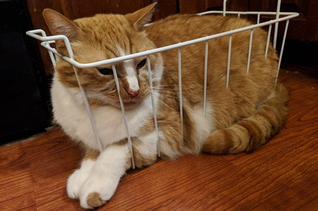 Cat in a wire basket.