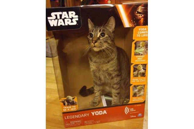 Cat in a cardboard box for a Yoda figurine.