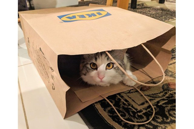 Cat in an Ikea bag.