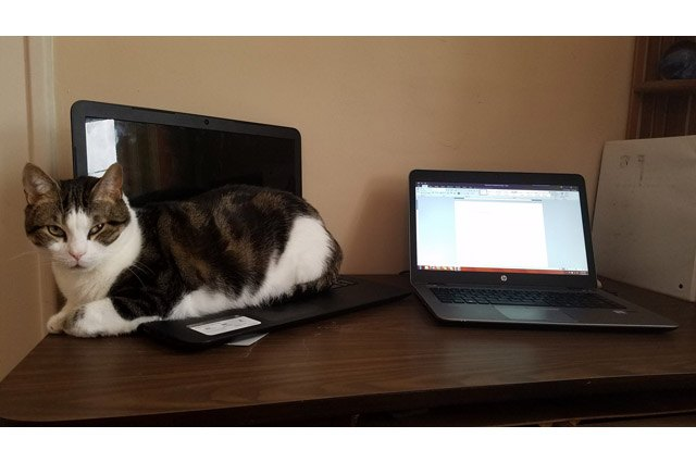 Cat sitting on a laptop next to another laptop.