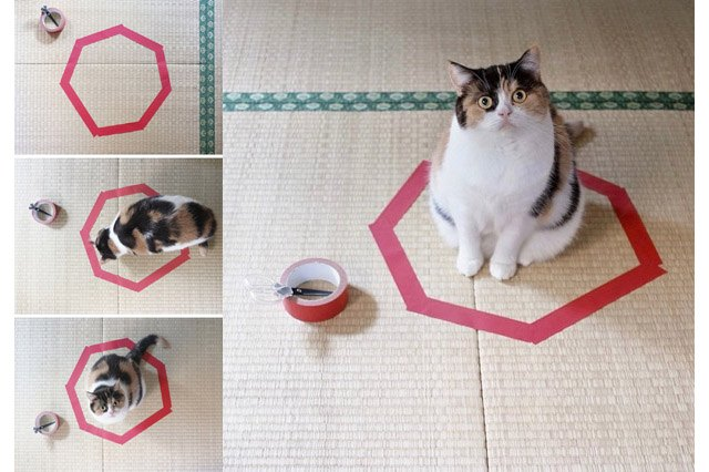 Cat walking into a circle of tape on the floor.