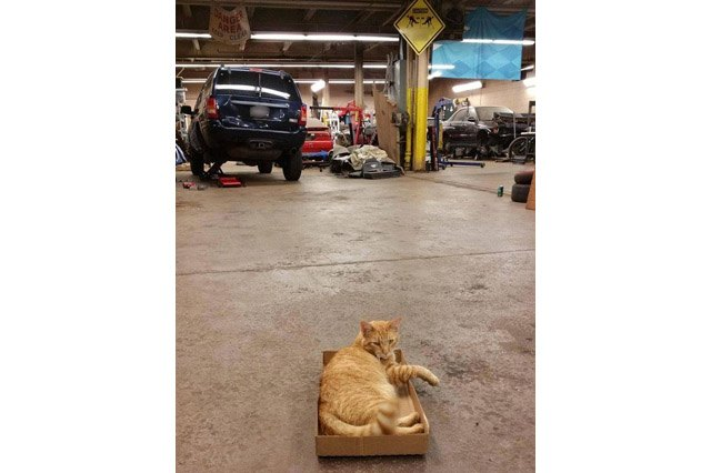 Cat sitting in a cardboard box in a mechanic's garage.