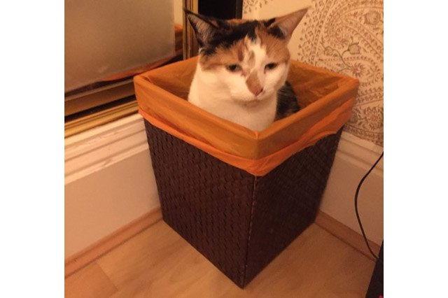 Cat sitting in a trash can.
