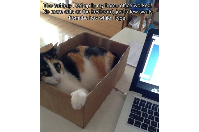 Cat sitting in a cardboard box next to a laptop.