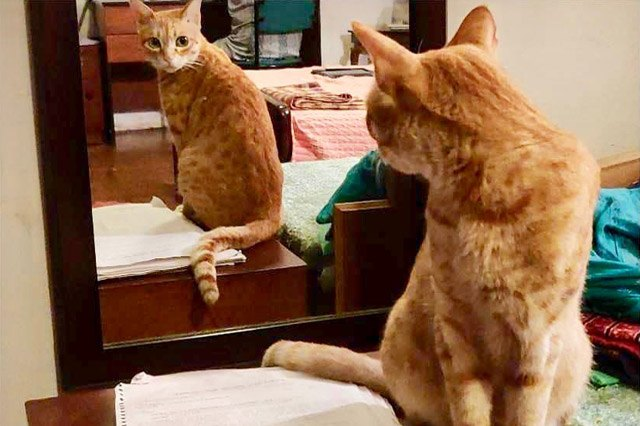 Cats reacting to mirrors