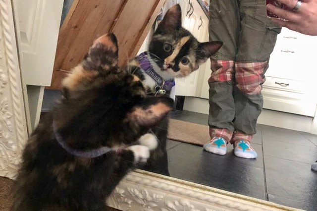 Cats reacting to their reflection in the mirror will never not be funny