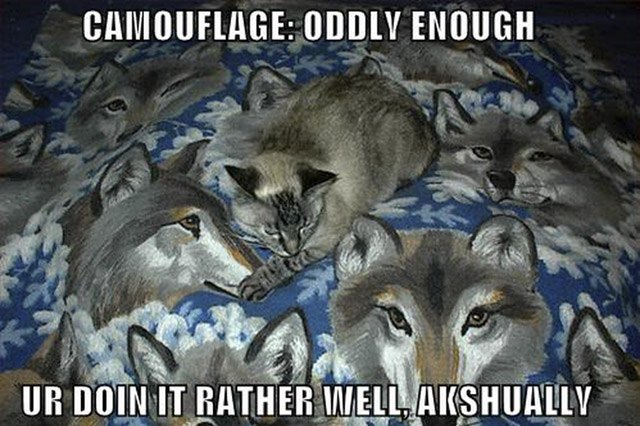 Cat sitting on blanket patterned with wolves.