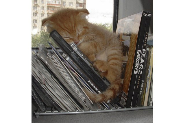 Kitten fast asleep on shelf with DVD's