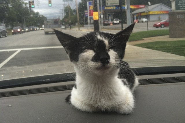 Happy rescued kitten sitting on a car's dash board