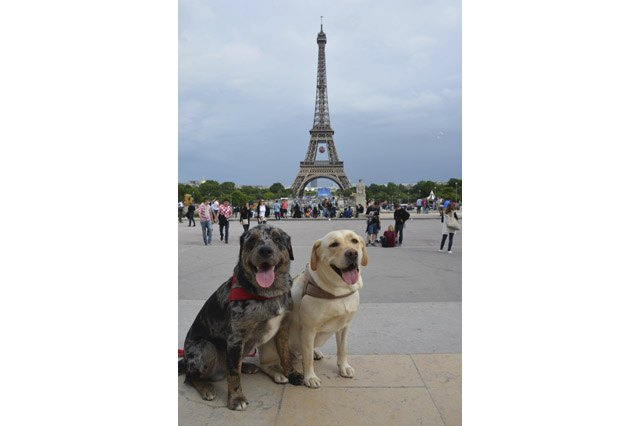 Happy dogs in front of the Eiffel tower
