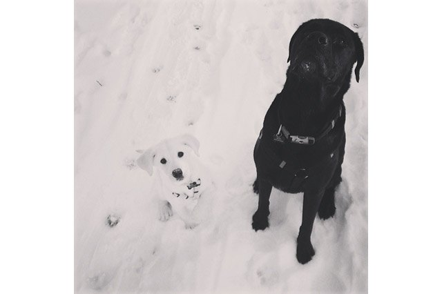 Black dog and white dog in the snow.