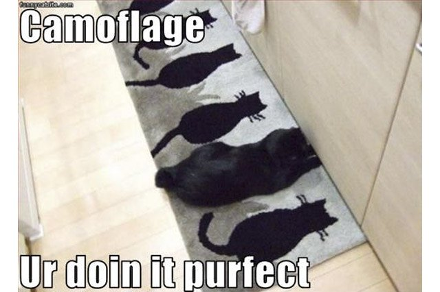 Black cat sitting on rug patterned with black cats.