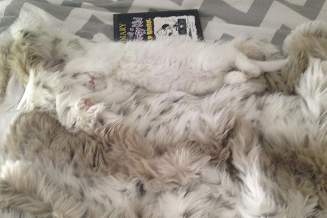 Fluffy cat on fluffy throw rug.