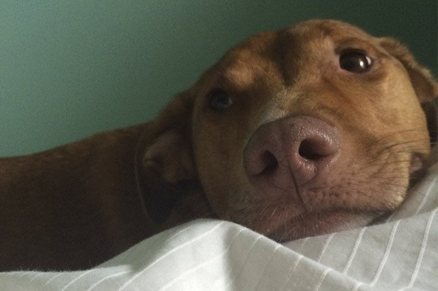 Dog waits patiently for owner to wake up
