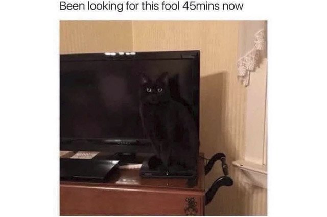 Black cat standing in front of black television screen