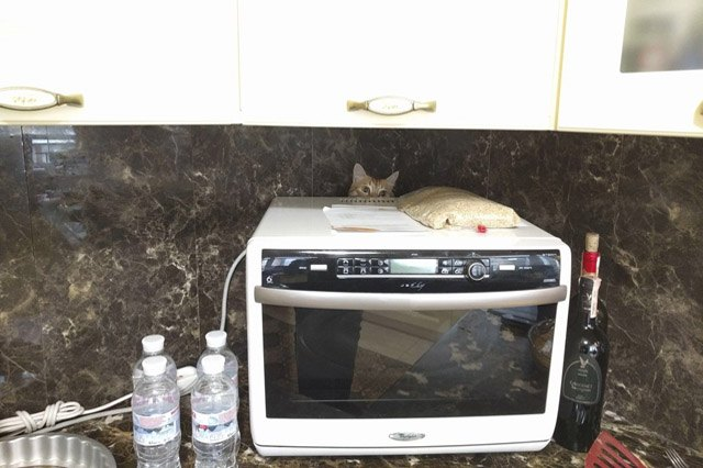 Cat hiding behind microwave.