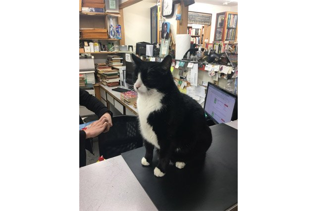 Edward Gorey bookstore cat
